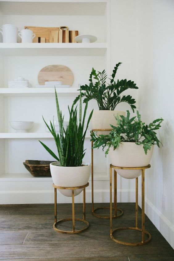 Plants and planters in a living room